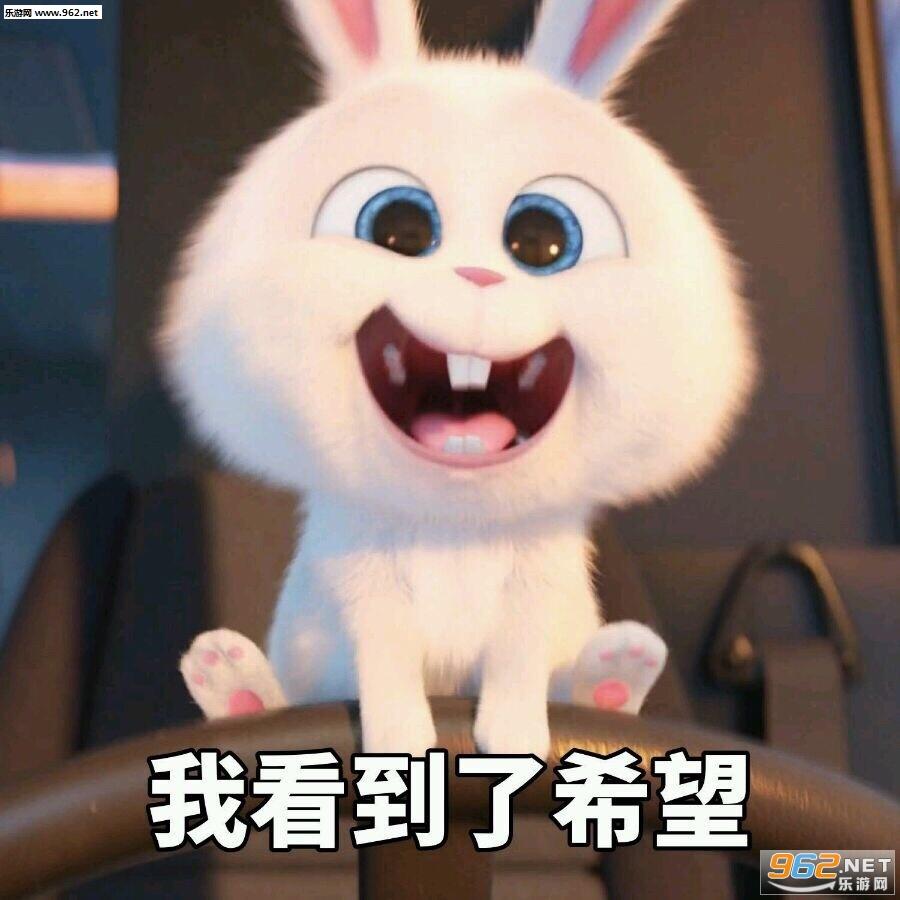 表情 呆萌兔子小白动画 兔子卡通图片 兔子简笔画 兔子的简笔画 看猎奇 表情
