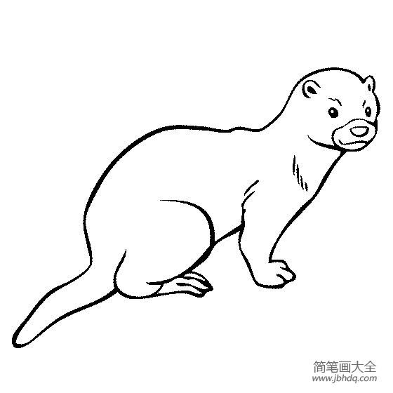 表情 野生动物简笔画水貂简笔画图片 其他动物简笔画 简笔画大全 表情