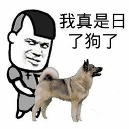 真是日了狗了 马和女人配对图片 狗怎么日人 梨子网 表情