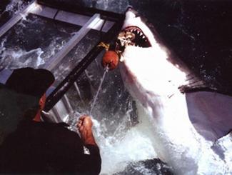 疯狂捕鲨人 竟能生擒海洋巨型杀手