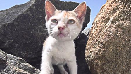 感受阳光 一只生活在里约热内卢沙滩旁的猫咪