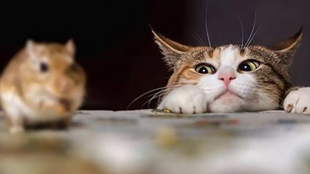 猫行克罗地亚 对摄像头感兴趣的猫咪