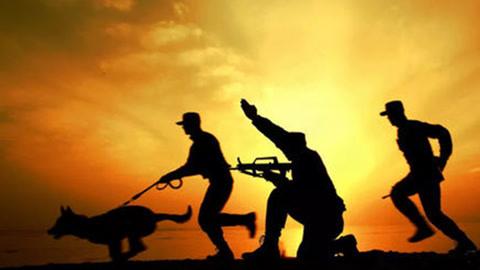 边防军犬的悲壮:致盲后仍能辨别印军
