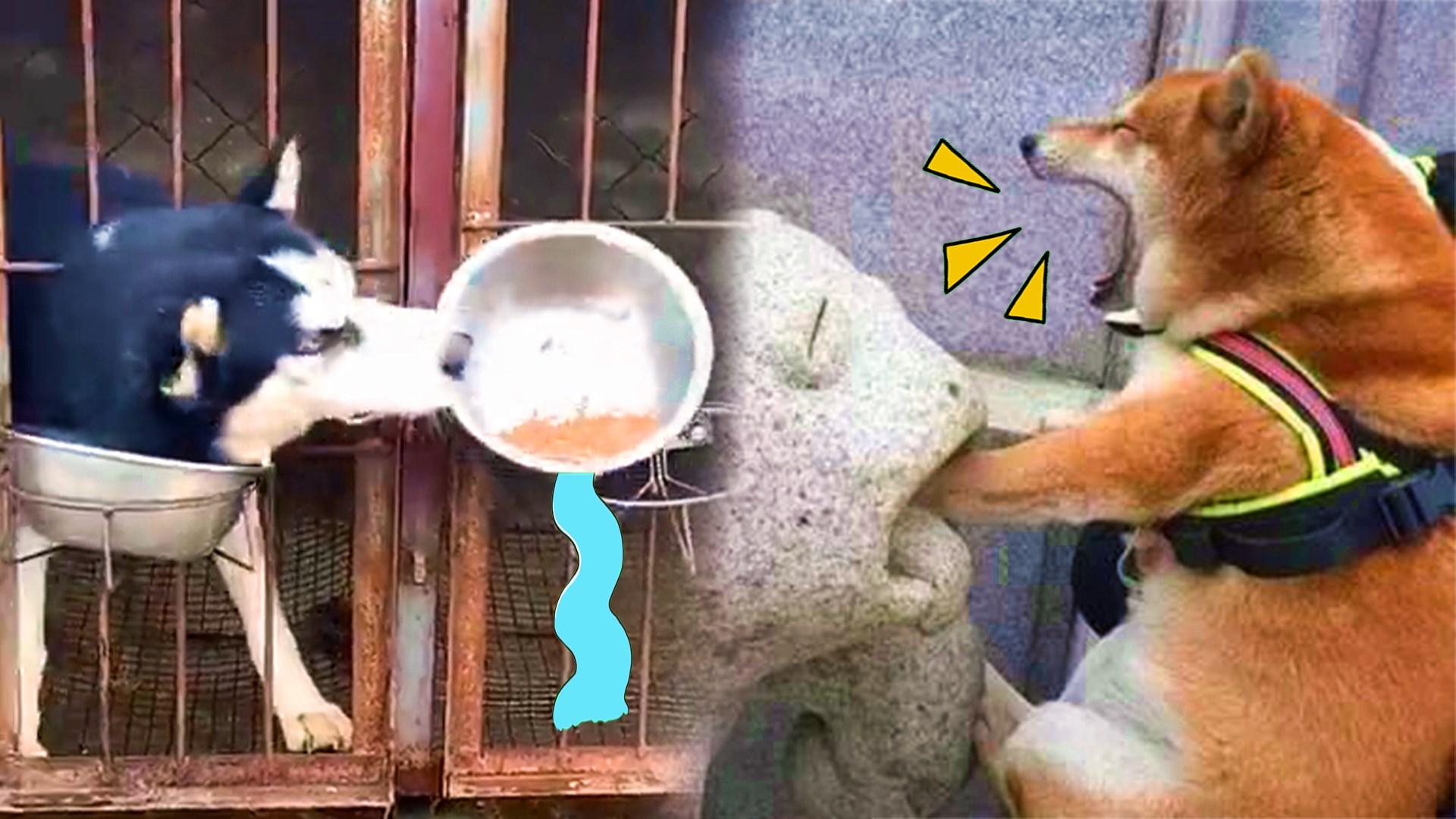 沙雕狗狗合集!小狗狗能有什么坏心思?