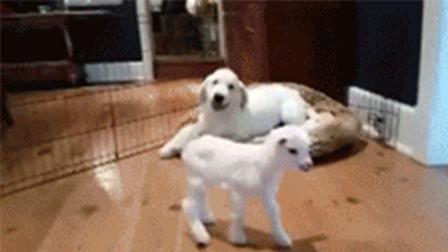 抖音霸气动物图片