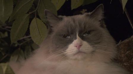 美国纽约 曼哈顿的猫咪