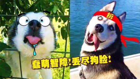 壁纸 动漫 动物 狗 狗狗 卡通 漫画 头像 448_252