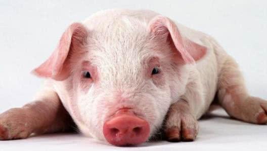 dnf私服辅助免费版未来2020年,猪肉市场仍然被看好!