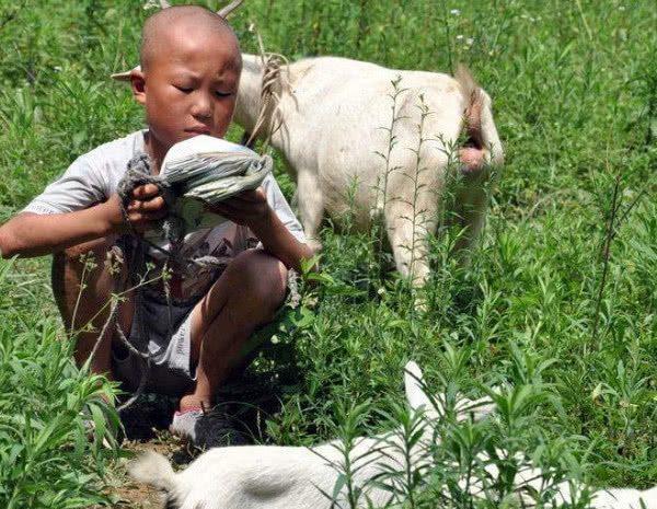 小夥路邊放羊,4個壯漢過來問路,他故意指錯方向,半年後驚喜來瞭