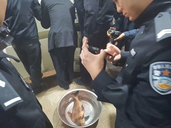 餐館後廚發現胭脂魚,重慶警方順線打掉非法捕撈地下產業鏈