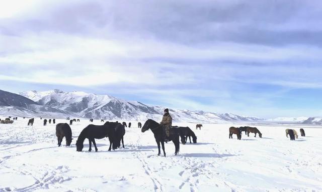 – -38℃,軍中牧馬人