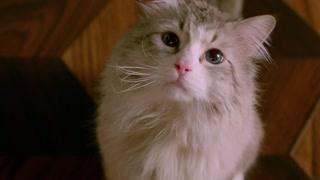 变成猫了看来就只能吃猫粮了 要早点习惯做猫的滋味