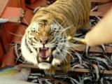 12期:《少年派的奇幻漂流》推介 看李安心中之虎