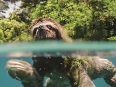 《地球:神奇的一天》树懒蜂鸟企鹅正片片段 见证动物生机勃勃