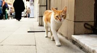 《爱猫之城》预告片