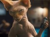 22期:喵星人PK汪星人 《猫狗大战2》展宠物也疯狂