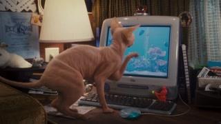 危险珍珠猫 猫狗大战的背后boss