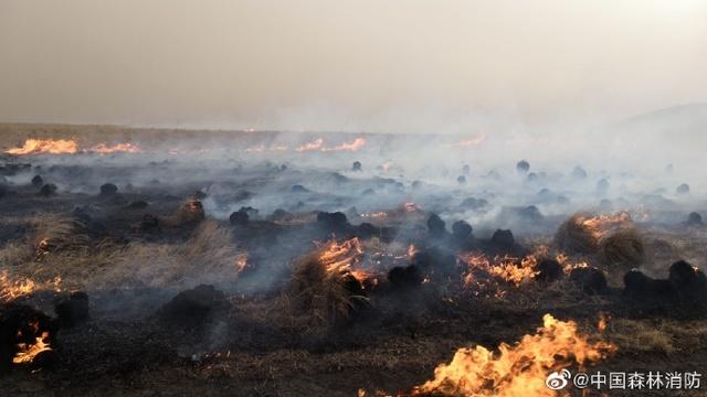 俄罗斯草原火灾入境 千余人扑救阻截