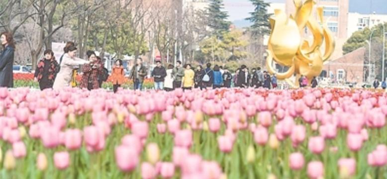 南京正是柳綠桃紅 市民游客流連忘返