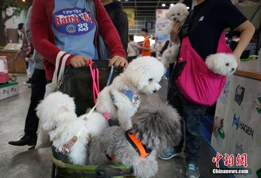 香港宠物节开幕