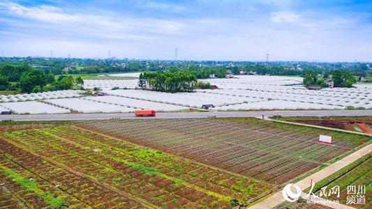 成都青白江获评国家农业绿色发展先行区