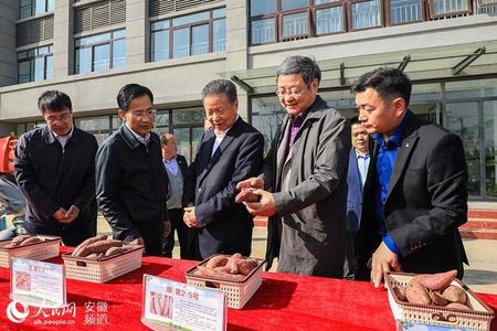 """安徽泗县:脱贫之后谋振兴 三农专家来""""把脉 """""""