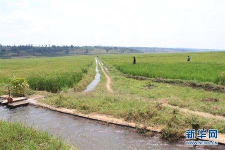 中国企业助力卢旺达农田水利建设