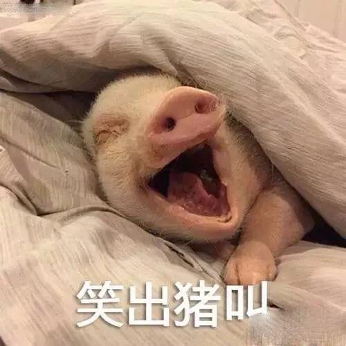 明明是狗年,为什么最火的是蠢萌的猪猪表情包? 轻松一刻 第7张