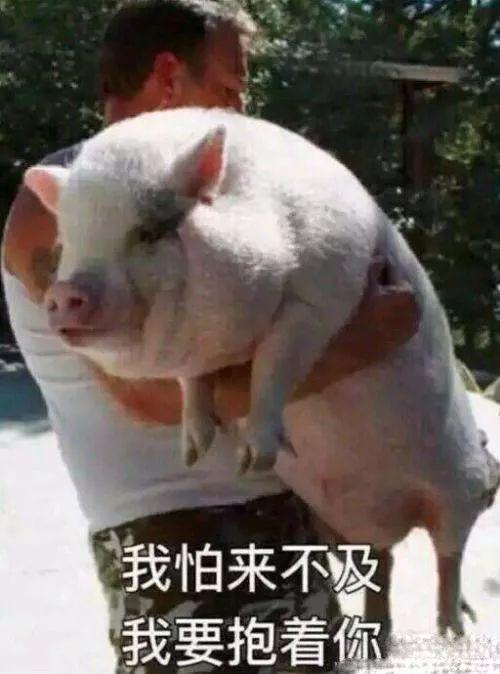 明明是狗年,为什么最火的是蠢萌的猪猪表情包? 轻松一刻 第8张