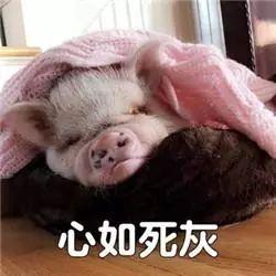 明明是狗年,为什么最火的是蠢萌的猪猪表情包? 轻松一刻 第14张