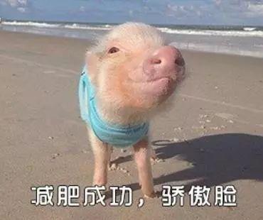 明明是狗年,为什么最火的是蠢萌的猪猪表情包? 轻松一刻 第21张