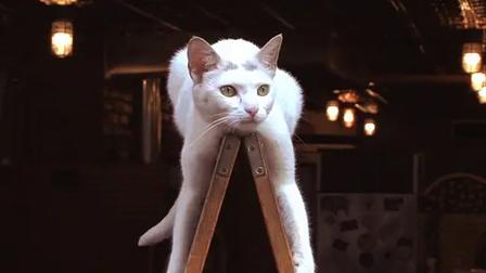 纽约街头一只有名的白猫 吸引游客到此参观