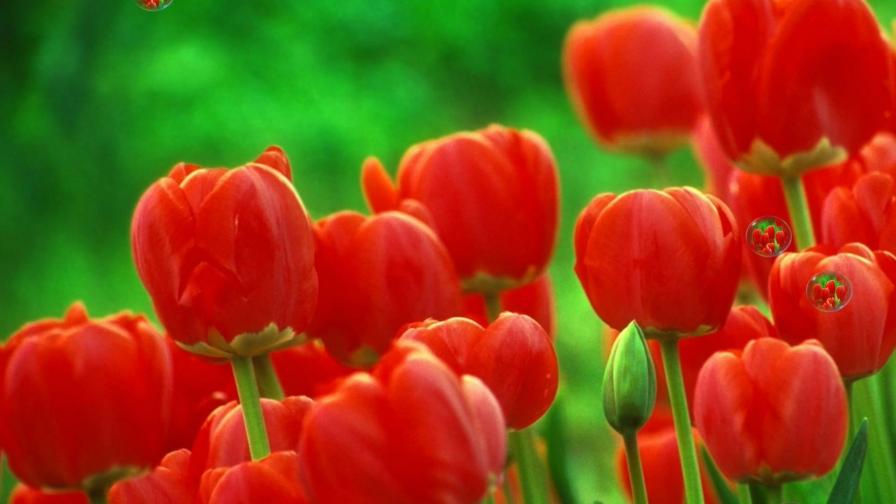 一首情歌《红尘女人花》