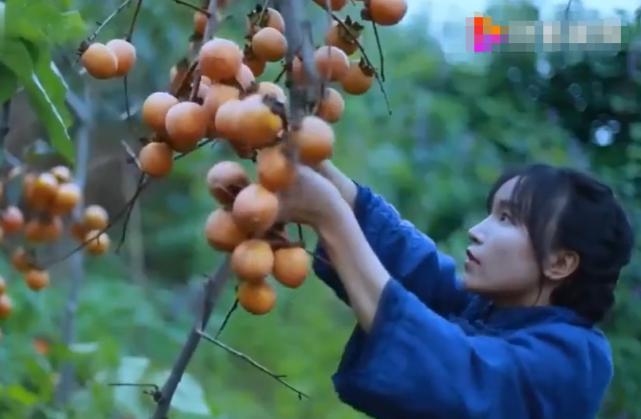 天龙八部私服架设全面教程李子柒菜园里柿子熟了,看清她做柿饼的细节,网友:完全没有食欲了!