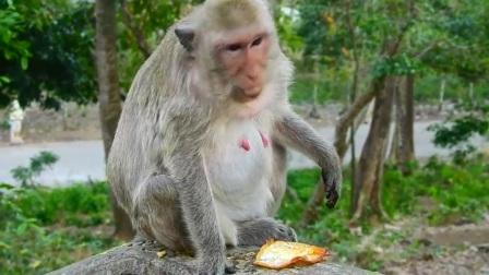 阿玛拉不喜欢鸡蛋!猴子老公喜欢吃意大利面和鸡蛋