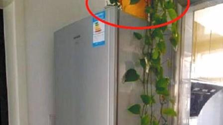 不管啥家庭,有3样东西不能放冰箱上,家里有的记得拿走,涨知识