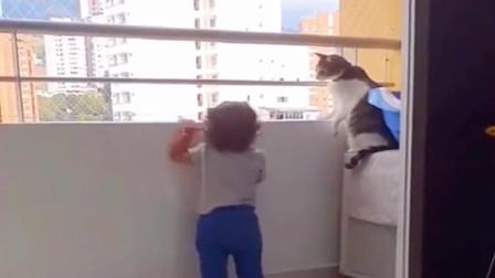 小猫咪承受了太多太多 操心坏了
