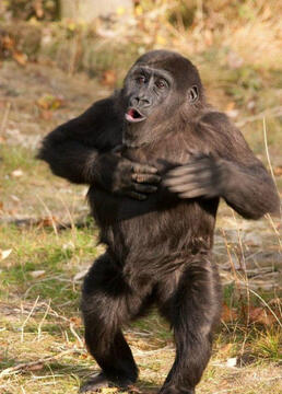 超级聪明的动物剧照