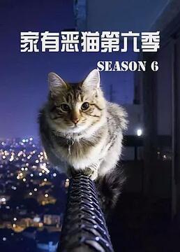 家有恶猫第六季