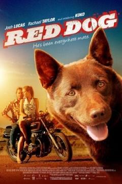 红犬历险记剧照