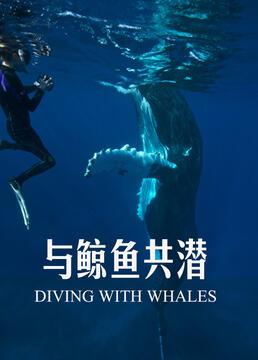 与鲸鱼共潜剧照