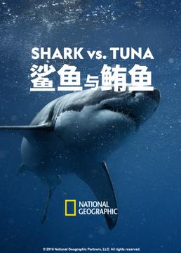 鲨鱼与鲔鱼剧照