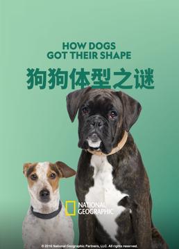 狗狗体型之谜剧照