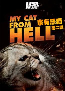 家有恶猫第二季剧照