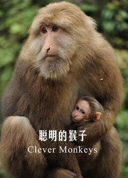 聪明的猴子剧照