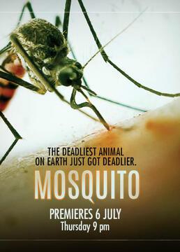 灭蚊大作战