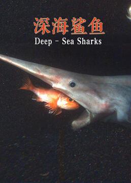 深海鲨鱼剧照