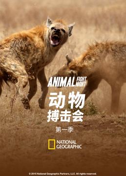 动物搏击会第一季剧照