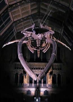 地平线恐龙迪皮与蓝鲸希望剧照