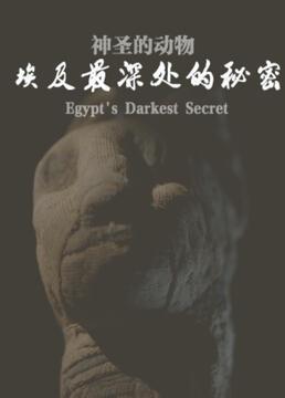 神圣的动物埃及最深处的秘密剧照
